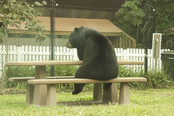 I know how he feels. Picnics ARE lonely. http://t.co/InbJuR35Pr