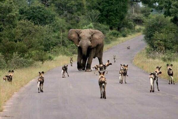 Must be one of the best pics I've seen for a while! Africa at its best. http://t.co/eaSpMc7741
