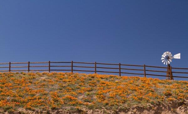 #SoCalMoments: Poppies in bloom in Lake Hughes, Calif. Photo by Lynn Longos http://twitter.com/latimes/status/463466603829411840/photo/1