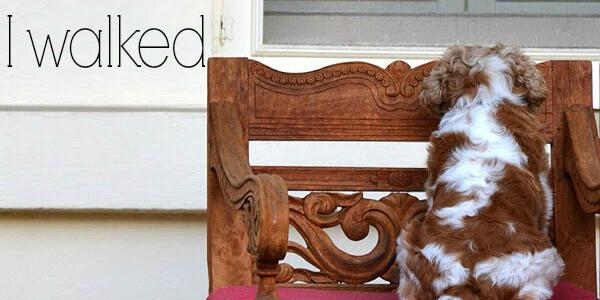 Just in case you missed it yesterday, I have a photoblog on @alreadyhomeADL http://t.co/8tENunkZ35 http://t.co/9aTtRqClOy
