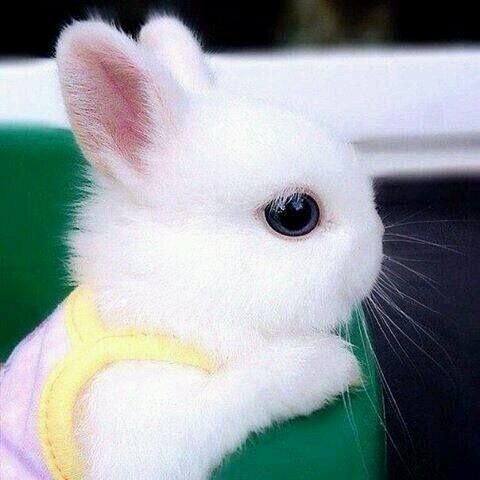 2+2는 귀요미  ♥♥♥  #wowkr http://t.co/H9Y9Elbyuq