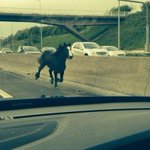 RT @MENnewsdesk: A right mare: Runaway horse causes chaos on M62 http://t.co/xj8n4ulHUA http://t.co/WejEyfw8pa