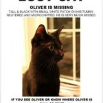 RT @LandALostPets: MISSING - OLIVER: m black cat Rideau & Cataraqui Sts in #ygk two wks ago.Pls see post! http://t.co/ntSyNtqikE http://t.co/uIqBWzTv70