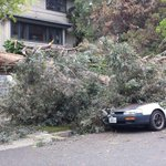 Large Fallen tree. Crocker highlands #oakland http://t.co/LJYMZyaQkg