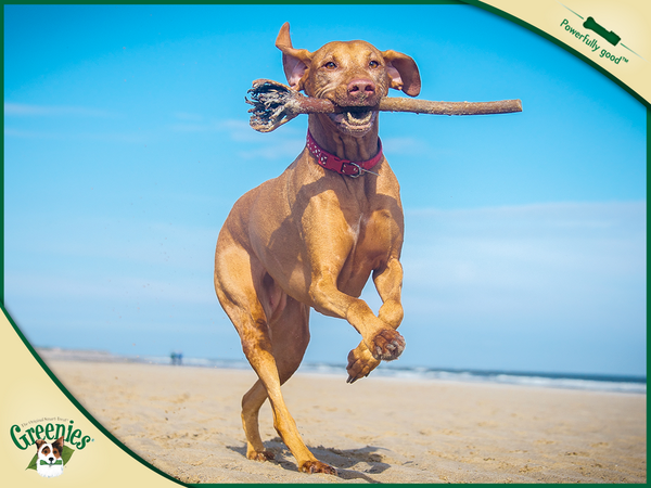 The oral care GREENIES® treats help ensure is good for whole body health. Your dog will come running for the taste! http://t.co/erdbyUpvRj