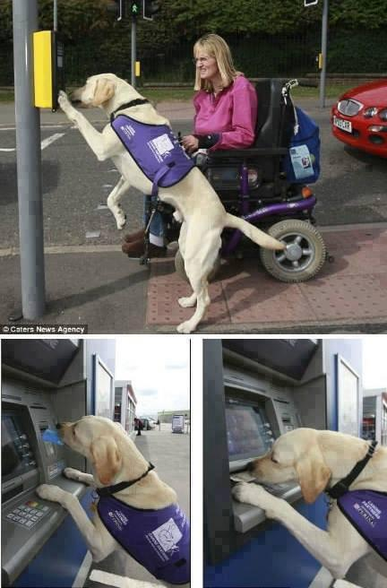 Talented dog gets money out of the cash machine for disabled owner! http://t.co/DRwXw6CE8m