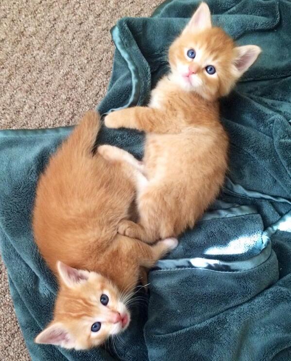 It's #caturday. We wuzn't doin' nuthin', swears. http://t.co/fggIQe3AXm
