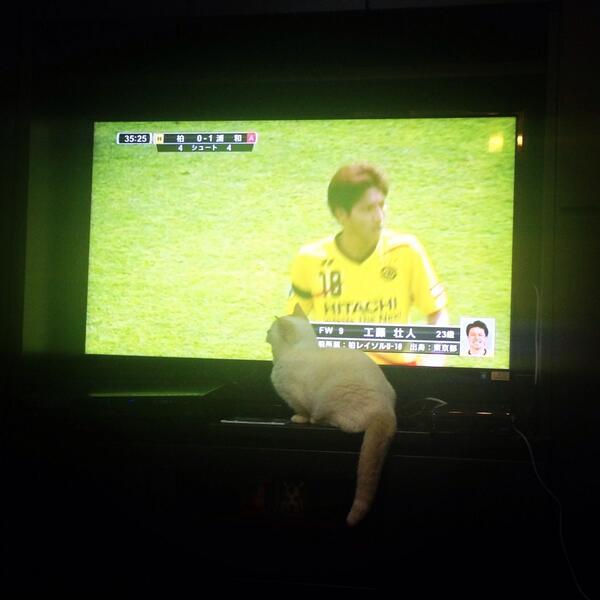 この子はサッカーの試合を見るのが大好き(๑¯◡¯๑)੭ु http://t.co/p22l8K4nrA