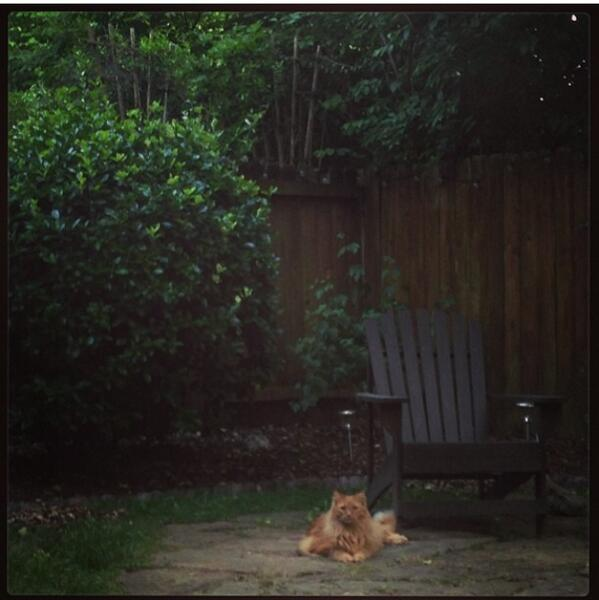If you live in Wedgewood Houston, keep an eye out for my friend's lost cat. Big orange tabby named Wrigley. #help http://t.co/ZQ8hjamos2
