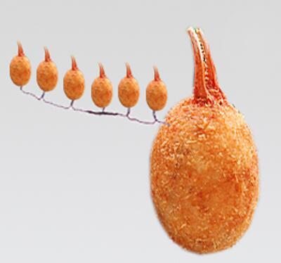 カニクリームコロッケが唱えた念仏から尊いカニクリームコロッケが生まれる画像ください http://t.co/6HM19I6yrw