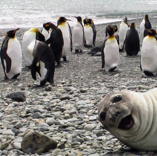 Bound to be a hit in NL. RT @Renzo_Soprano: Hahahaha...this is the best photobomb ever!!!  I just had to tweet it! http://t.co/mpY2RoCpVP