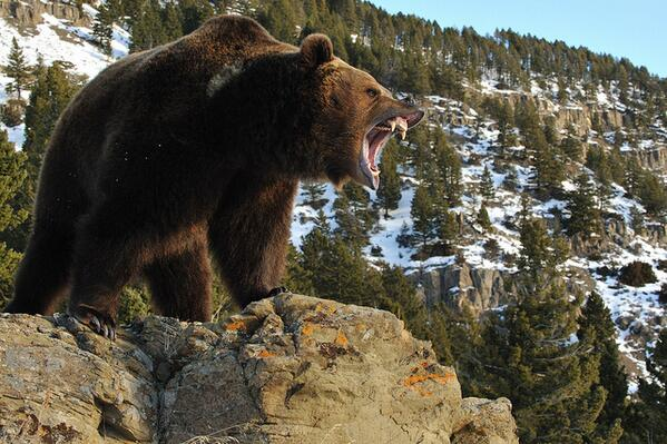 Are you an angry bear because it's Monday? Tell us your favorite song to get you in a good mood! http://t.co/NUkKwqZ2ee