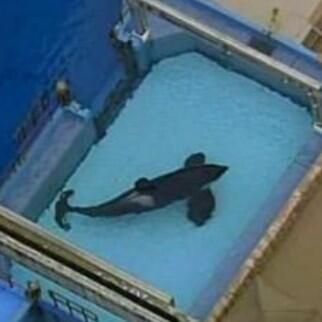 This is how Tilikum lives. How can people not see how inhumane these conditions are, he does NOT deserve this! http://t.co/E4FN8aaVez