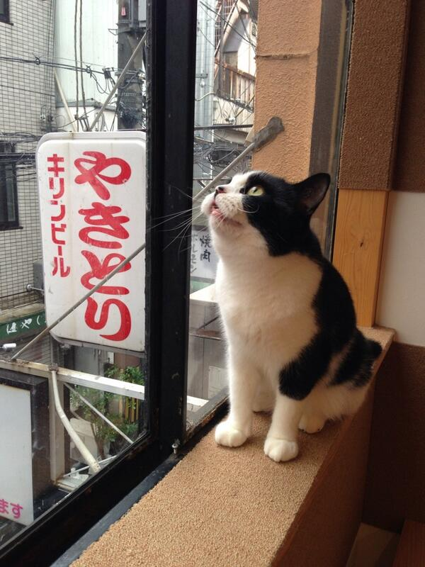 食べたいんとちゃいますかぁ?|x・`)チラッ RT @miyufukyu いい味出してます http://t.co/22Zm4mNCER