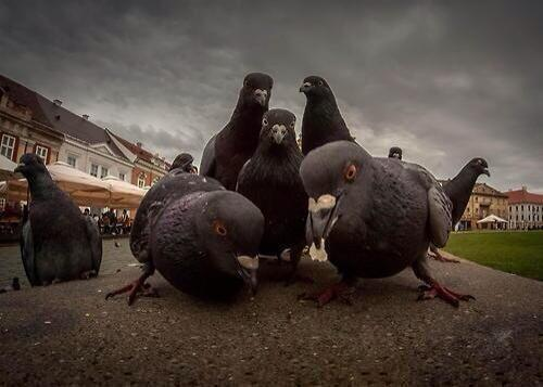 Beastie Birds. RT @dhaelis: These pigeons look like they're about to release the best hip-hop album of 2014. http://t.co/NUVNl7b6LH