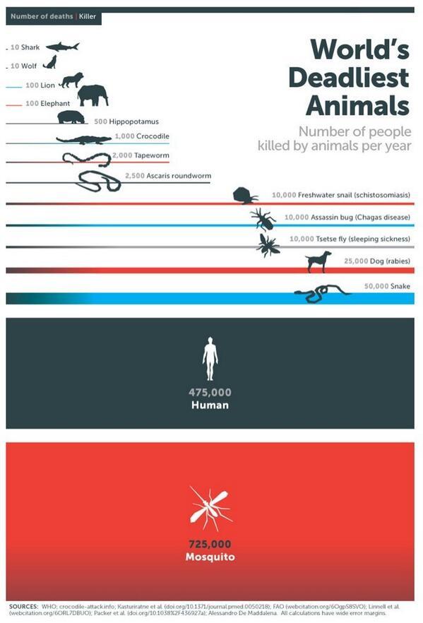 إنفوجرافيك : أعداد الوفيات السنوية.. لأخطر الحيوانات التي تؤدي لموت الإنسان.. *قد إيش النامس ذابحنا ! http://t.co/IUOsahdYM2