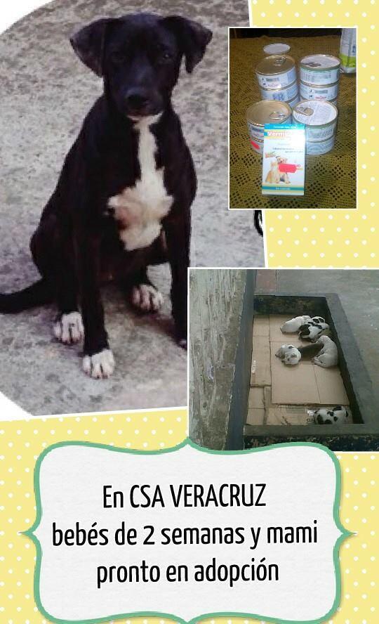 Esta gordita es maravillosa; tuvo a sus bebés y está en el CSA #Veracruz con sus cachorros. Urge apoyo! Info conmigo! http://t.co/FN78GNxQ6u