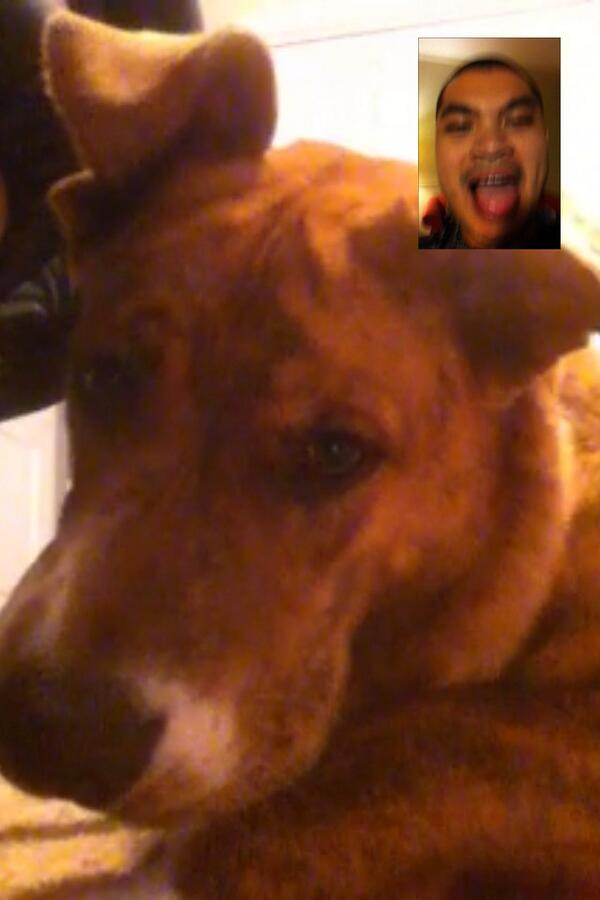 RT @hobbes_23: Skyping with daddy. He's away again and he's trying to cheer me up. http://t.co/4p9ysWP18x @iLoveDogsInc @caninepeace...