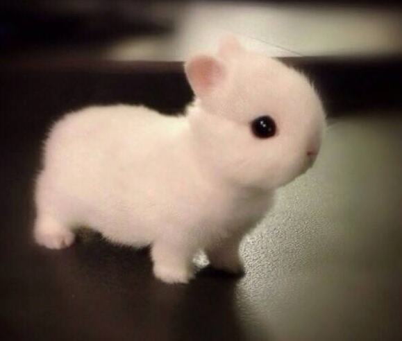 If you're having a bad day, here's a pic of fluffy baby bunny: http://t.co/Dlk3AoqvaA