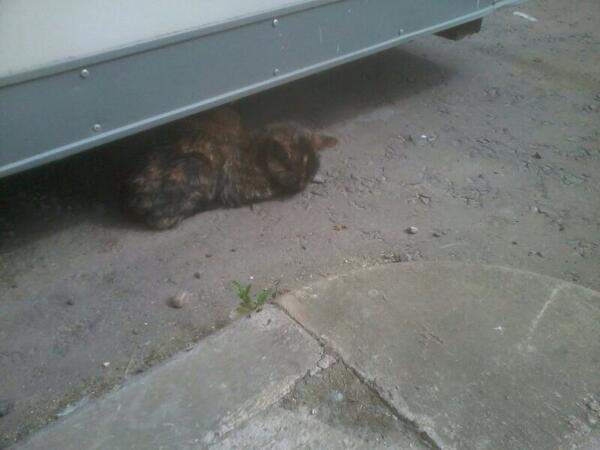 Hubby found an injured cat at work today, it's now with the @CatsProtection Dundee. Anyone missing her? Please RT http://t.co/mASTNRdRrJ