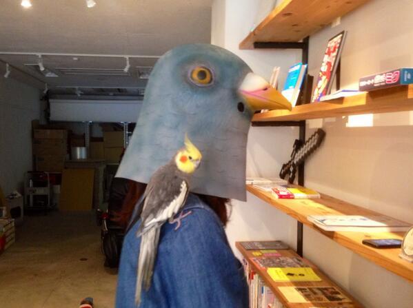 いままで懐かなかったインコが、ハトマスクをつけたら急に落ち着き出した。 #pigeonmask http://t.co/5s6n5BUygU