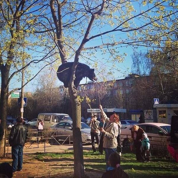 Обычный день в России ))) http://t.co/S6Mj4eqtlP