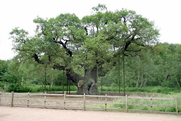 .@MayorofLondon says no UK tree is older than 200 years - come & see #SherwoodForest's 800-1000yrs-old Major Oak! http://t.co/Km1oST4qRv