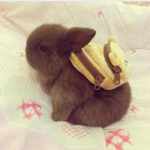 Bunny, wearing a backpack http://t.co/BDnaoz1j7L
