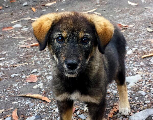 ¡Un perrito rescatado es una de las criaturas más nobles y agradecidas del mundo! #Adopta #Colabora http://t.co/M3gNHUiaWF