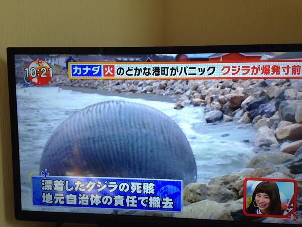 こんなのみたらクジラの屍骸だとは思わないよな。海坊主 http://t.co/Dom50psfju