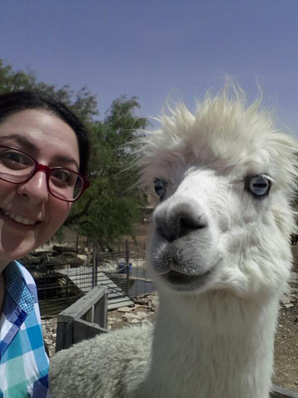סלפי עם אלפקה http://t.co/x2vZE1HArj