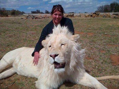 Beautiful Albino Lion http://t.co/ECNGpwZRyZ
