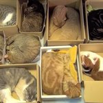 Box Hotel for Cats . http://t.co/ZmaulL6shi