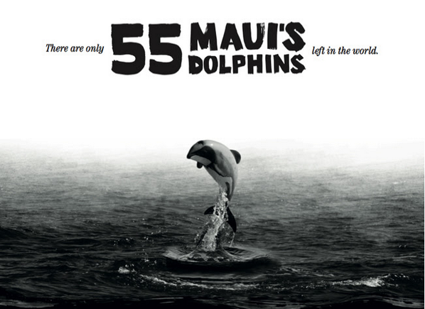 There are only 55 Maui's Dolphins left in the world! Help save them here: http://t.co/wVFuX5bKqI #TheLast55 http://t.co/EYIe58kGMX