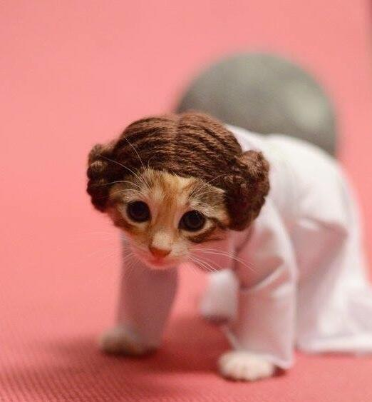 Help me Obi Wan Kenobi- you're my only hope! #starwars http://t.co/Rd5A36xjrG
