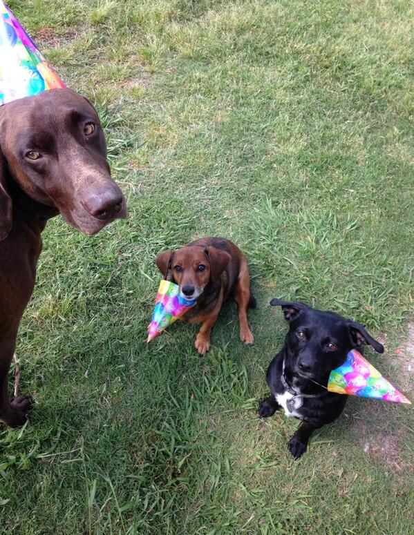 Party hats and dogs don't mix well BOL! http://t.co/TWHMcX8g1f