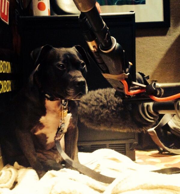 Big thanx 2 @MMAjunkieGeorge @TheGoze for having myself & @VicktoryDogMel in studio to film #VicktoryDogs documentary http://t.co/Tx5oDJJzXI