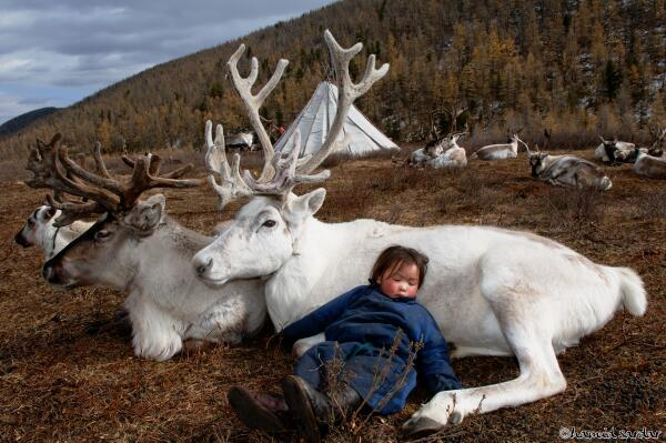 Mongolian Nomad Boy, sleeping with the reindeer #photo by Hamid Sardar #travel http://t.co/oYpyEdMhXW rt @zaibatsu @travelnkids
