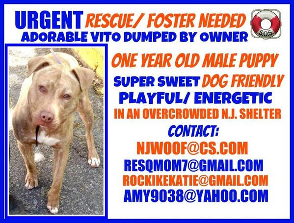 """NJ!!! """" Vito"""" needs rescue NOW!! Help us help this beautiful puppy! #rescue #loversnotfighters please RT!! ❤ http://t.co/WH6fyaZpdo"""