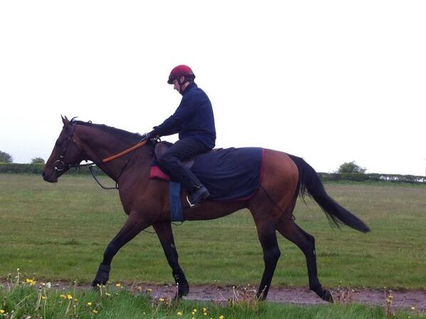 Al Kazeem being ridden out this morning having left a few disappointed, and lovely ladies behind. He is still a gent. http://t.co/3rbViteEly