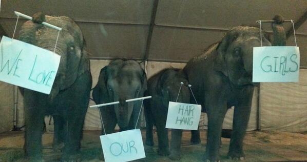 The performing pachyderms from Ringling Bros. Presents LEGENDS send their love to the Medeiros Troupe. #CircusStrong http://t.co/oyRm2cm3DP