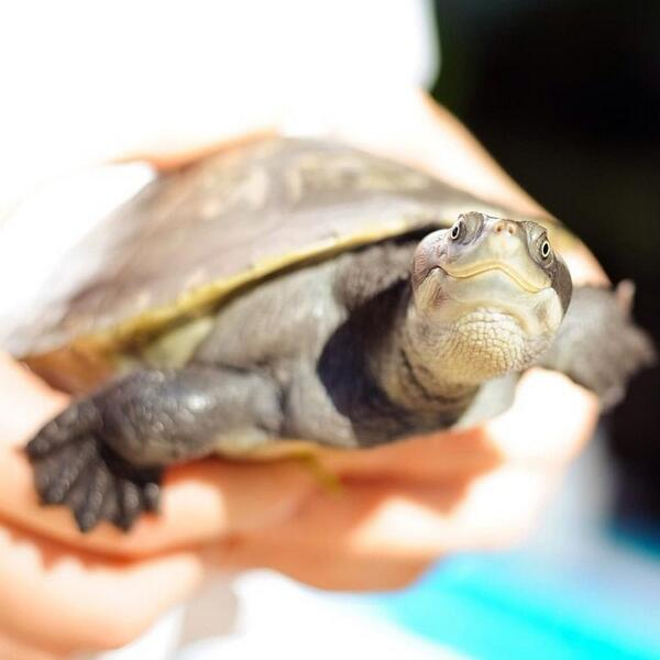 Smile, it's Friday! Love this happy #turtle capture snapped by @OOHaymanIsland. http://t.co/UD8ea08j76