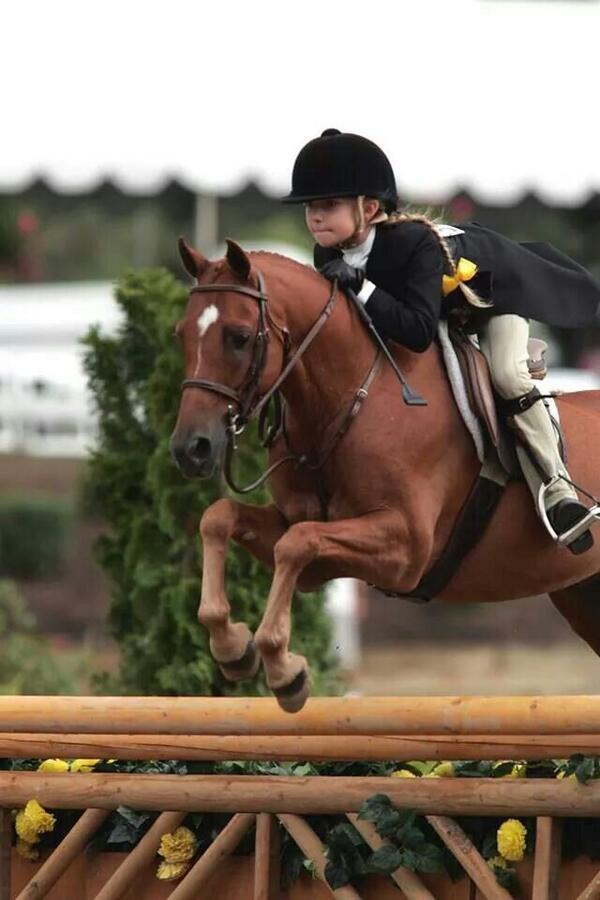 Y que pero le ponen a este jinete? #PostalesdeCampo #Caballos #Horses http://t.co/ndfmzuxnFc