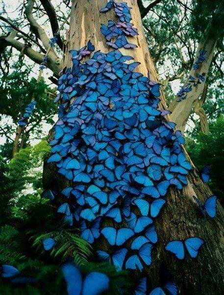Amazon Rain Forest in Brazil with Blue Butterflies http://t.co/vqECSiwybK