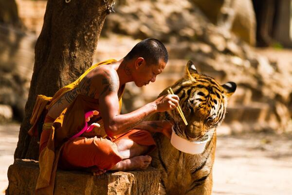 Monk and Tiger sharing their meal. http://t.co/PVky8suv39