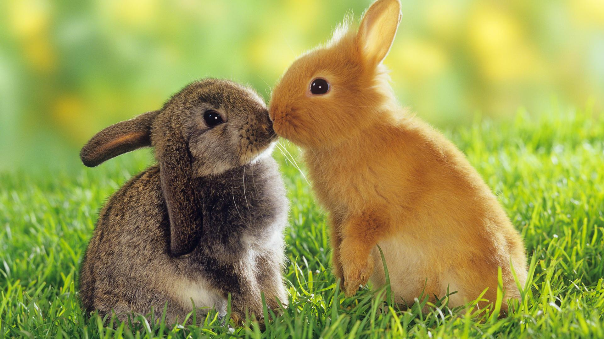 RT @BlakeMichael14: This is a picture of two baby bunnies kissing. Share it around. Have a nice day. http://t.co/WGtVPQ62kp