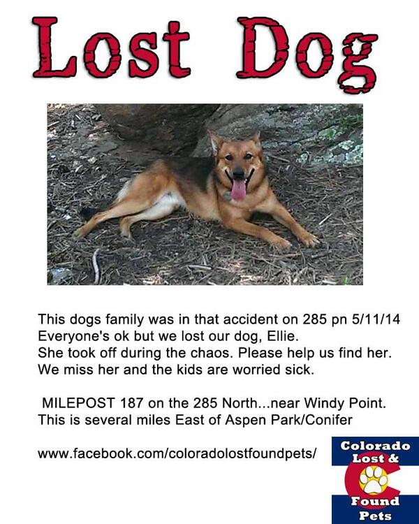 #Urgent #Lost #Dog Ellie lost during accident HWY 285 - WIndy Point Aspen Park #Conifer #CO  http://t.co/KTFlKcNw9e http://t.co/0DuMSv3GQR