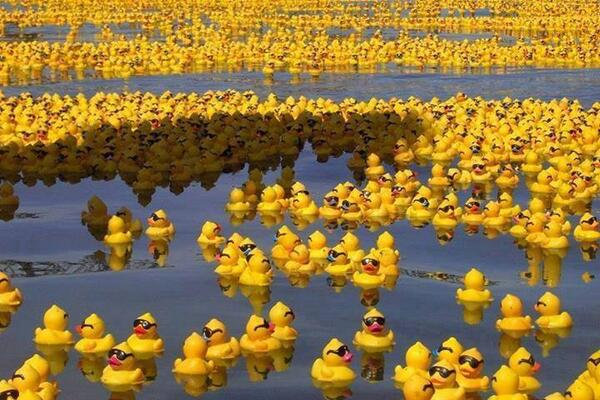In 1992 a shipping container filled with over 28000 rubber ducks fell overboard. Around 2000 pieces are still missing http://t.co/xrugJpLNgI
