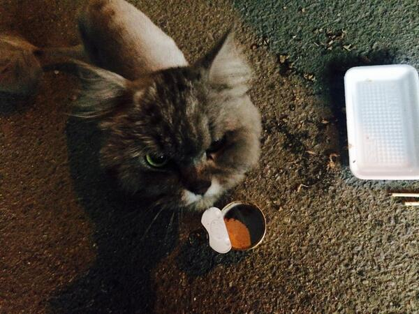 시화 정왕동 충현마트 근처에 집에서 키운것 같은 고양이 한마리를 발견했습니다. 불렀더니 다가오는게 사람의 손길이 묻은 고양이 같아요. 집에는 못대려가고 참치캔 하나 사맥였습니다. 주인분이 제 트윗을 봤으면하네여 http://t.co/sW8FkYShES