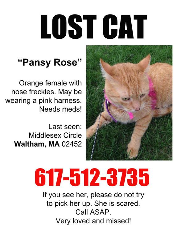 Anyone near Boston. We're looking for Pansy Rose. Her Mom is heartbroken. Pls RT @LilyLuWhoT @grrlysquirrel75 http://t.co/M3kahbgyuy